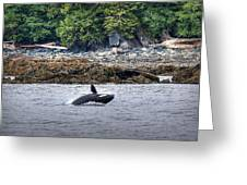 Misty Fjords Orca Greeting Card