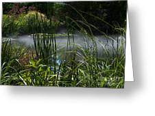 Misty Lily Pond Greeting Card