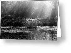 Misty Marsh - Black And White Greeting Card