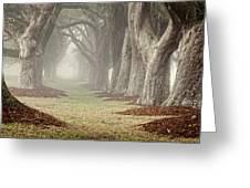 Misty Morning Avenue Of Oaks Greeting Card