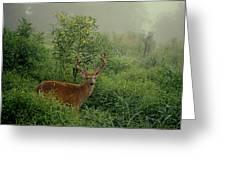 Misty Morning Deer Greeting Card