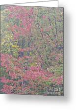 Misty Morning Foliage Greeting Card