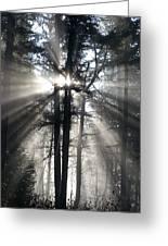 Misty Morning Sunrise Greeting Card