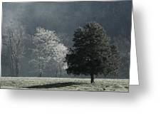 Misty Morning Trees Greeting Card