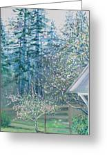 Misty Morning With Apple Blossoms And Redwoods Greeting Card