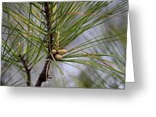 Misty Pines In Spring 2013 Greeting Card