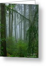 Misty Woodland Greeting Card