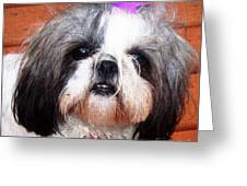 Mitzie - Shih Tzu Greeting Card