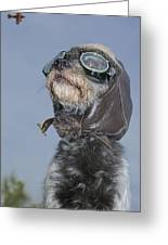 Mixed Breed Dog Dressed In Leather Cap Greeting Card by Darwin Wiggett