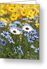 Mixed Daisies Greeting Card