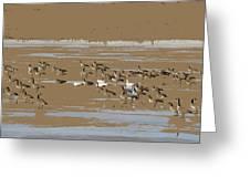 Mixed Flock Greeting Card