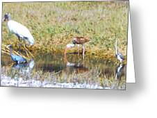 Mixed Group Of Shore Birds Greeting Card