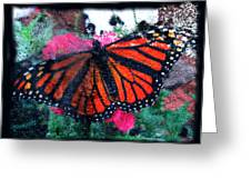 Mnarch Butterfly Greeting Card