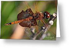 Mocha And Cream Dragonfly Profile Greeting Card