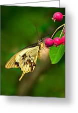Mocker Swallowtail Butterfly And Berries Greeting Card