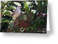 Mocking Bird And Berries Greeting Card