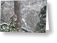 Mockingbird Back Greeting Card