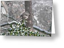 Mockingbird Cold Greeting Card
