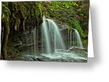 Mohawk Streams And Roots Greeting Card