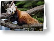 Mohu Eats Bamboo Greeting Card