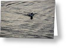 Moire Silk Water And A Long Tailed Duck Greeting Card