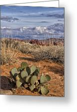 Mojave Desert Cactus Greeting Card