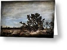 Mojave Desert Joshua Tree In Cima Greeting Card