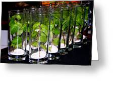 Mojitos In The Making Greeting Card