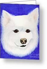 Molly The American Eskimo Dog Greeting Card