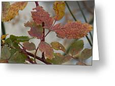 Molting Leaves  Greeting Card