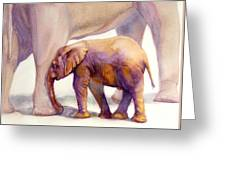 Mom And Baby Boy Elephants Greeting Card
