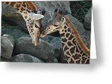 Mom And Baby Giraffe Greeting Card