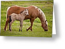 Mom And Foal 2 Greeting Card