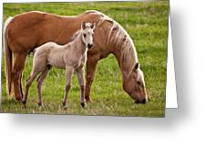 Mom And Foal Greeting Card