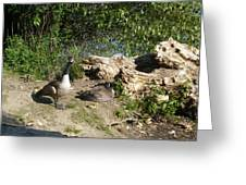 Mom Dad And Goslings Greeting Card