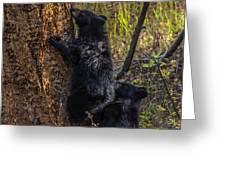 Mom Said Up The Tree Greeting Card