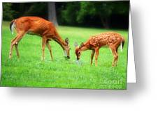 Mom Sharing A Snack With Her Baby Fawn Greeting Card
