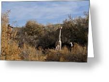 Momma And Baby Giraffe Greeting Card