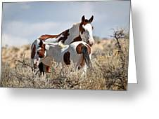 Momma And Baby In The Wild Greeting Card