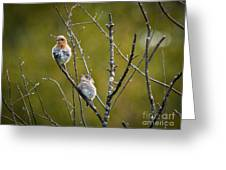 Momma Bluebird And Baby Greeting Card