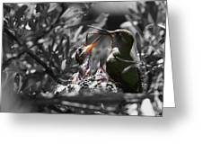 Momma Hummingbird Feeding Babies Greeting Card by Old Pueblo Photography