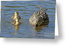 Momma Mallard And Her Ducklings Greeting Card