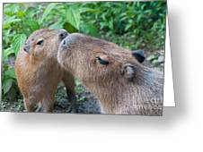 Mommy Kisses Greeting Card