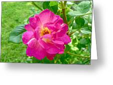 Mom's Beautiful Red Rose Greeting Card