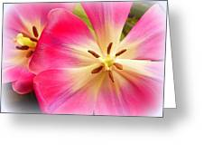 Moms Tulips 1 Greeting Card