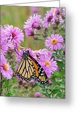 Monarch 1 Greeting Card