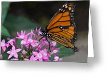Monarch 2 Greeting Card
