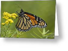 Monarch 2014 Greeting Card