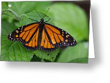 Monarch 3 Greeting Card
