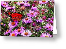 Monarch Among The Asters Greeting Card